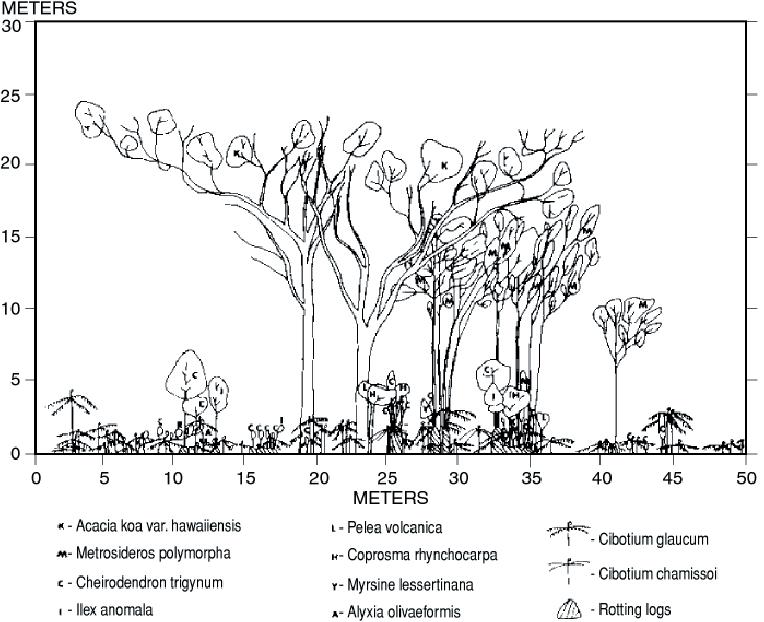 8. Stand-profi le diagram of a Hawaiian rain forest