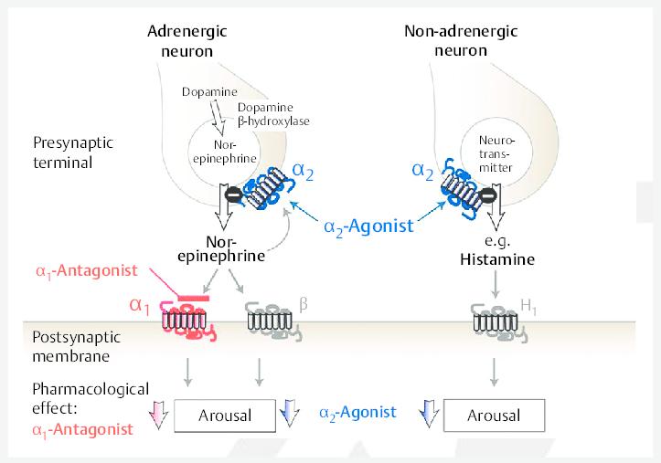 α-Adrenergic receptors modulating sleep/wake neurons. Neurons releasing... | Download Scientific Diagram