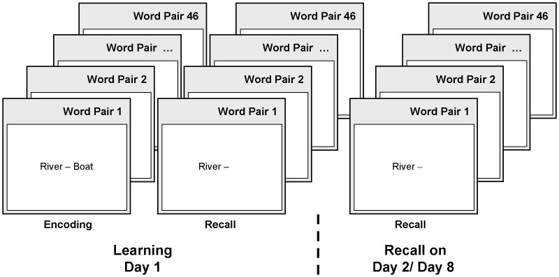 To test declarative memory consolidation, the word-pair