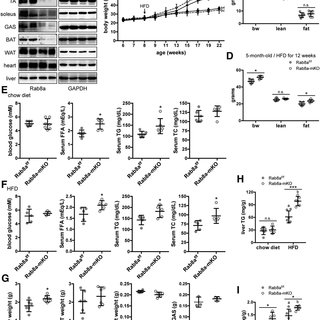 LD sizes and fusion in Rab8a-deficient muscle cells and