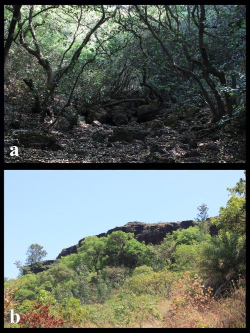 small resolution of  a dense evergreen forest of mahabaleshwar b showing wall of lateritic