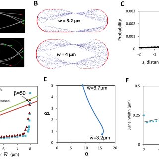 Fission yeast cell shape and regulation by the Cdc42 and