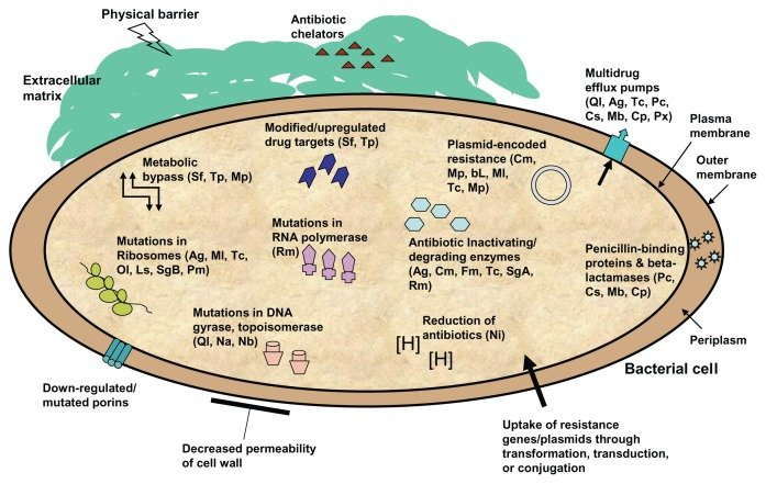 Innate and acquired antibiotic-resistance mechanisms in ...