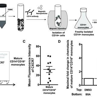 (PDF) Frontline Science: CXCR7 mediates CD14 + CD16