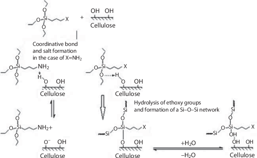 Schematic of silane coupling agent interactions with