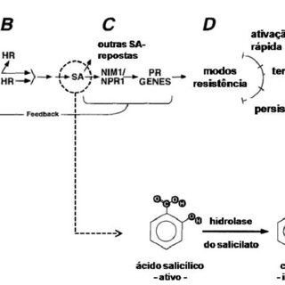 3: Mecanismo de la transesterificación básica Fuente