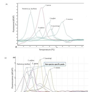 (PDF) Evaluation of a Real-Time PCR Test for the Detection