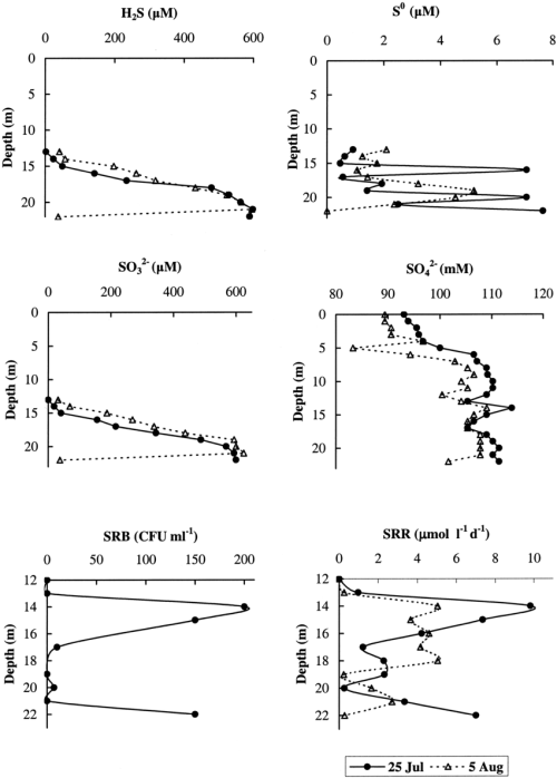 small resolution of depth profiles for concentration of hydrogen sulfide elemental sulfur sulfite and sulfate and abundance