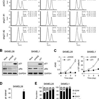 (PDF) A mortalin/HSPA9-mediated switch in tumor