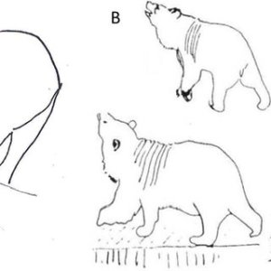 Diagram of abnormal behaviours for brown bears: A Old