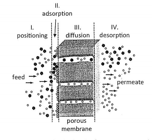 Sketch of molecular transport through a membrane by