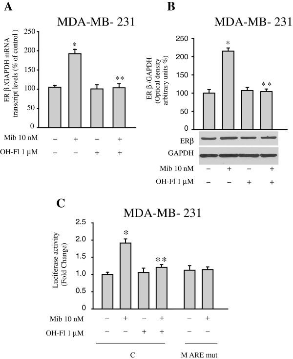 Mibolerone increases ER beta expression in MDA-MB-231