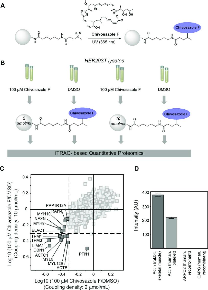 Chivosazole F chemoproteomics and in vitro binding assay