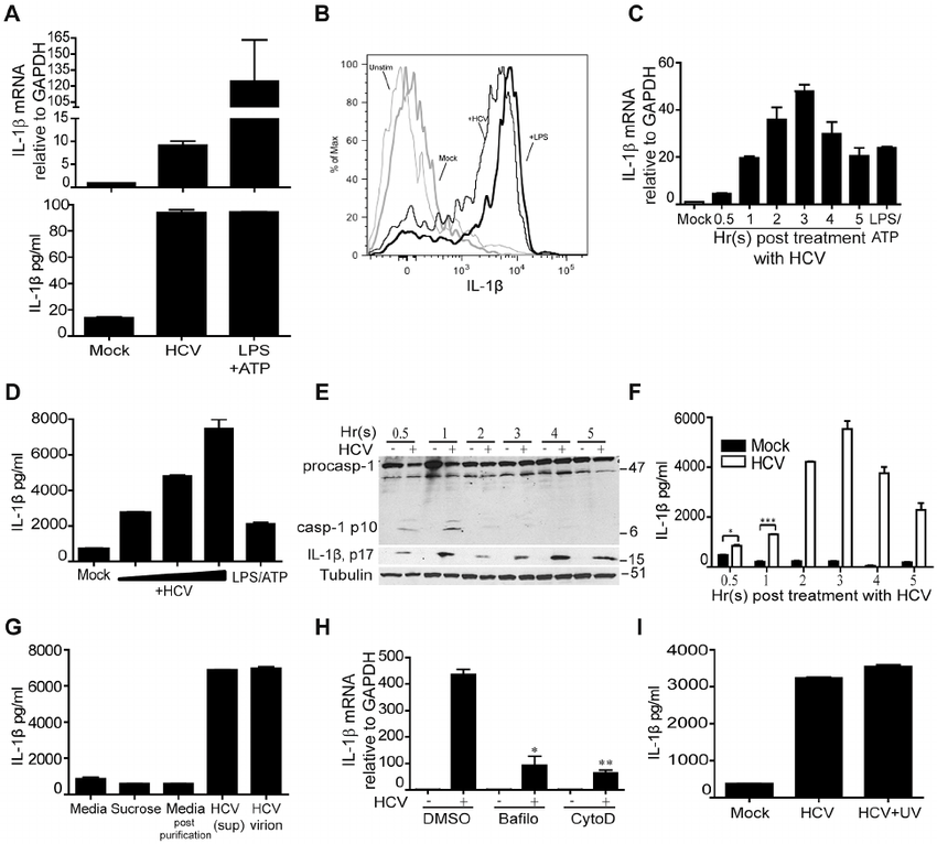 HCV stimulates IL-1 b production upon uptake by