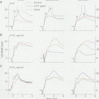 (PDF) The Effect of Social Experience on Serotonergic