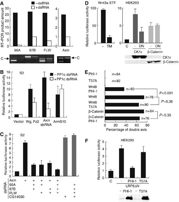 PP1 regulates Wg/Wnt signaling upstream of Arm/β-catenin