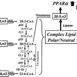 (PDF) Fatty Acid Regulation of Hepatic Gene Transcription