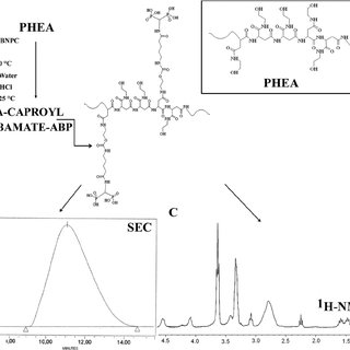 Schematic synthesis of the PHEA-caproylcarbamate-ABP ( a