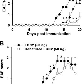 The role of LCN2 during LPS-induced glial activation