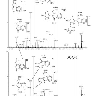 S. MALDI TOF mass spectrometry of pure pvfp-1 Shodex