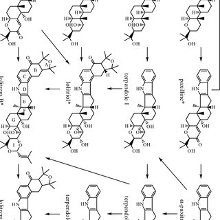 1. Life cycles and artificial mating strategy for Epichloë