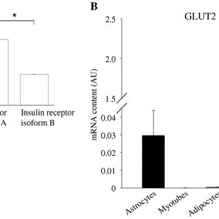 (PDF) Insulin Promotes Glycogen Storage and Cell