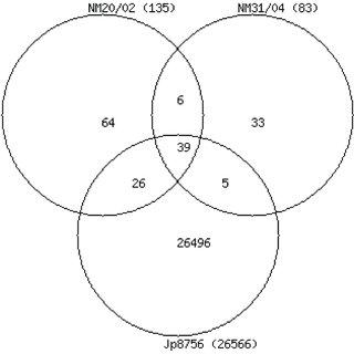 Venn diagram of single nucleotide polymorphisms in M