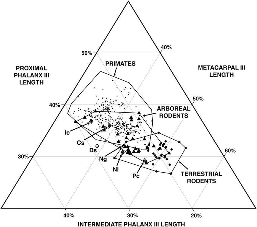 Intrinsic manual ray III proportions in primates and non