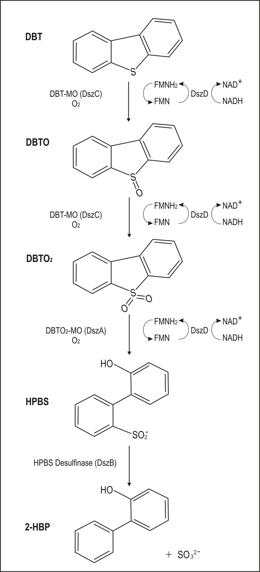 hight resolution of the 4s pathway for the biodesulfurization of dbt download scientific diagram