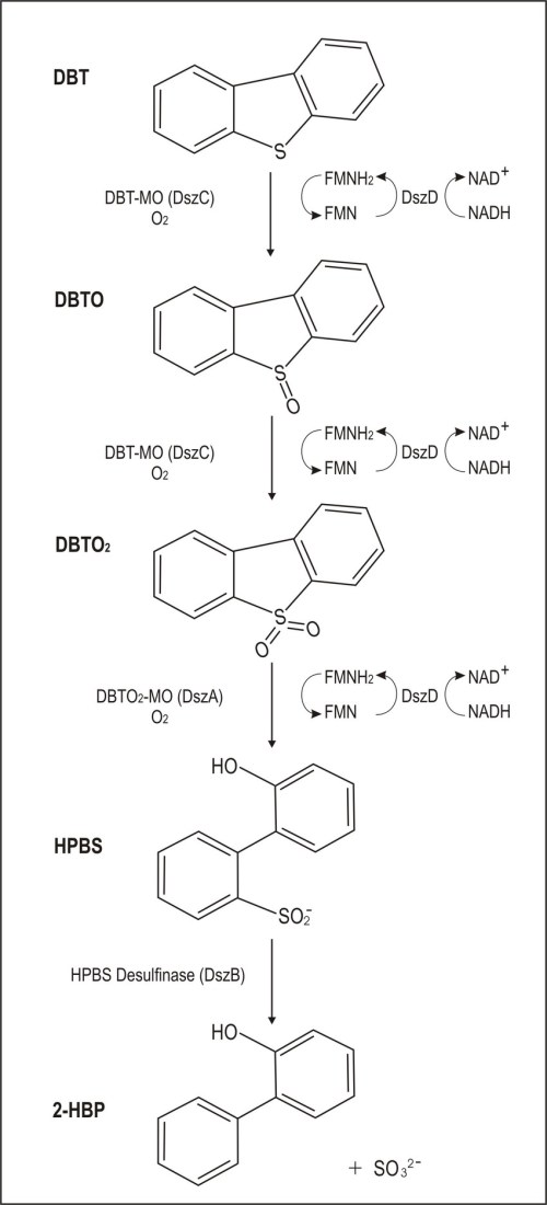 small resolution of the 4s pathway for the biodesulfurization of dbt download scientific diagram