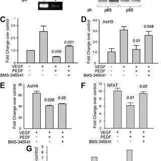 (PDF) NF- B balances vascular regression and angiogenesis