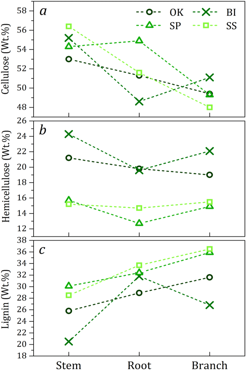 medium resolution of comparison between oak birch scots pine and sitka spruce species including their stem