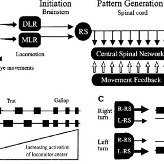 (PDF) Integration of posture and movement: Contributions