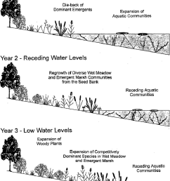 simplified diagram of the effects of water level fluctuations on coastal wetland plant communities of [ 850 x 1085 Pixel ]
