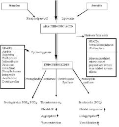 flowchart showing the mechanism of action of nsaids download scientific diagram [ 850 x 1008 Pixel ]