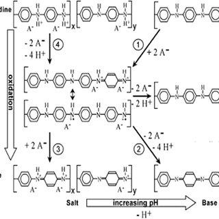 Scheme 1 Oxidation/reduction chemistry of polyaniline