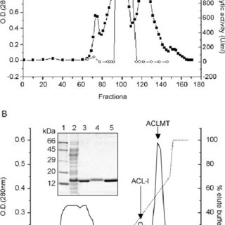 (PDF) Effects of a myotoxic Asp49 phospholipase A(2) (ACL