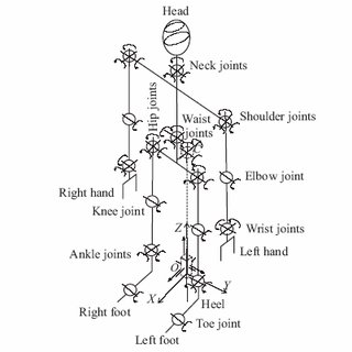 Phases of biped gait. The indicator of the degree of