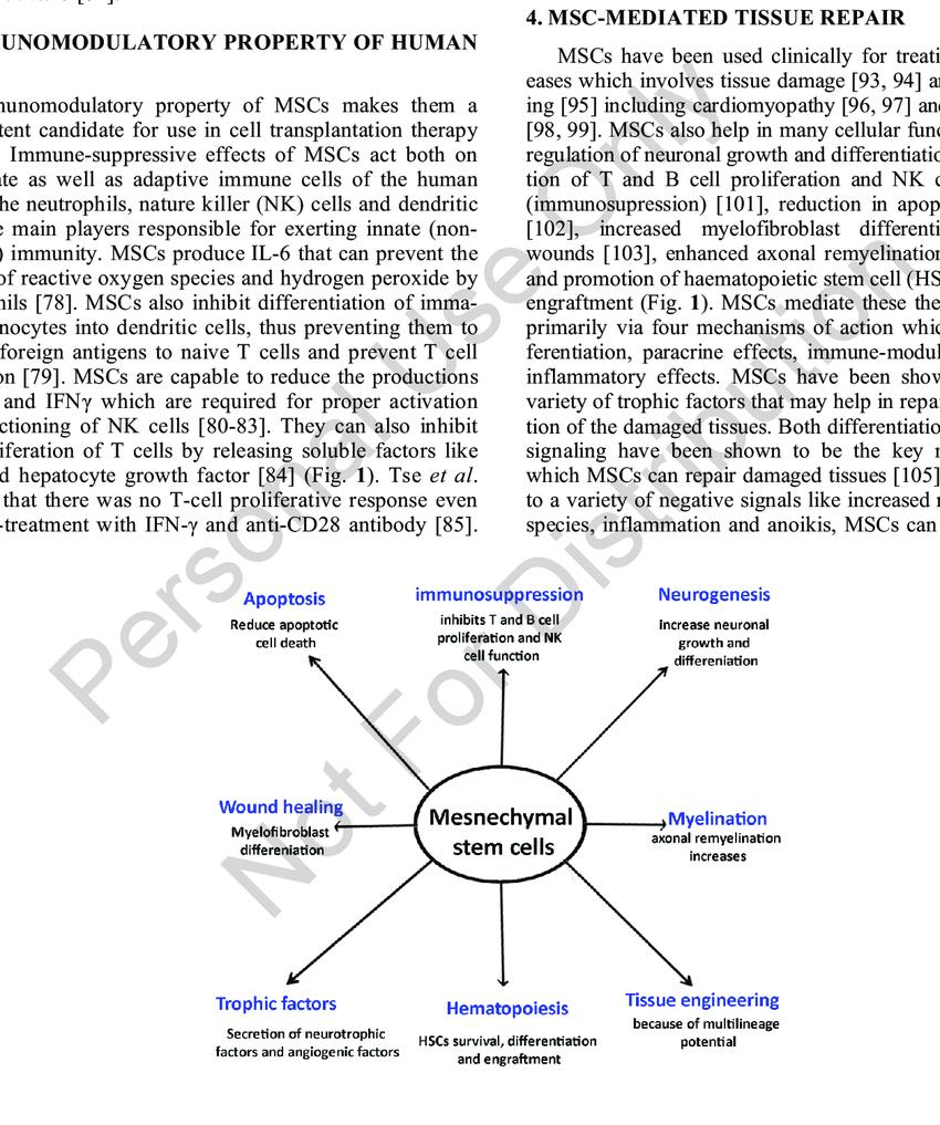 medium resolution of key cellular functions of human mesenchymal stem cells mscs human mscs have immunomodulatory