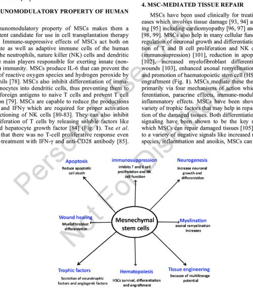 small resolution of key cellular functions of human mesenchymal stem cells mscs human mscs have immunomodulatory