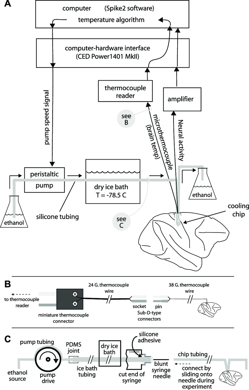 hight resolution of schematic illustration of equipment used during cooling a a peristaltic pump pushes ethanol through