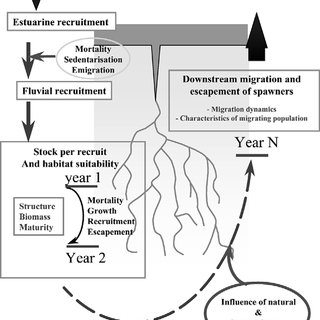 (PDF) Management and restoration of European eel