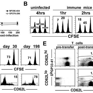 (PDF) Rapid in vivo killing by memory CD8 T cells