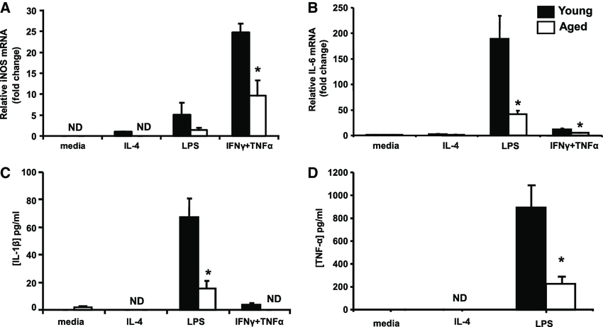 M1 responses in adherent splenocytes from young and aged