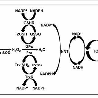 Progression of non-alcoholic fatty liver disease (NAFLD