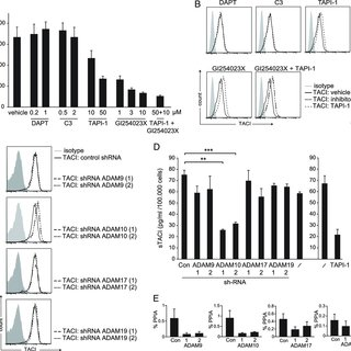 (PDF) The Immunoregulator Soluble TACI Is Released by