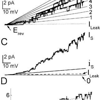 (PDF) Glutamate-Gated Calcium Fluxes in Arabidopsis