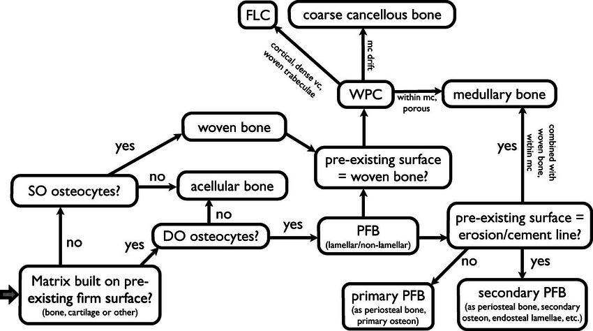 Flow-chart indicating how to classify and subdivide bone