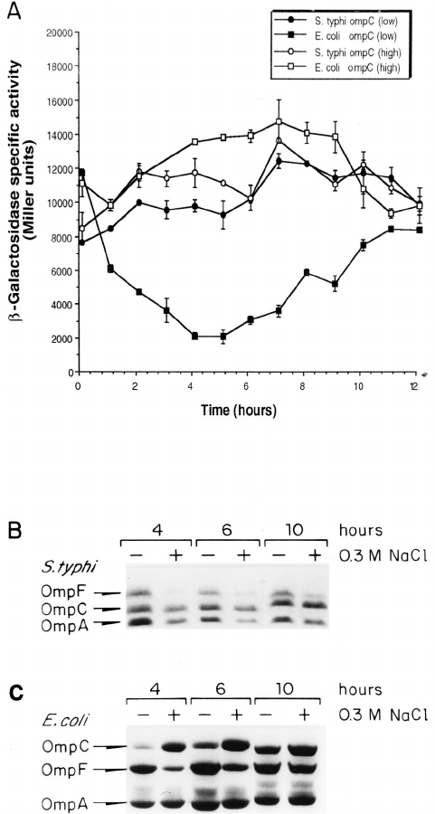 Kinetics of E. coli or S. typhi ompC and ompF expression