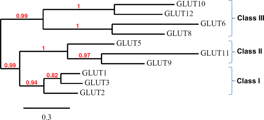 Phylogenetic tree of multiple alignments of all known